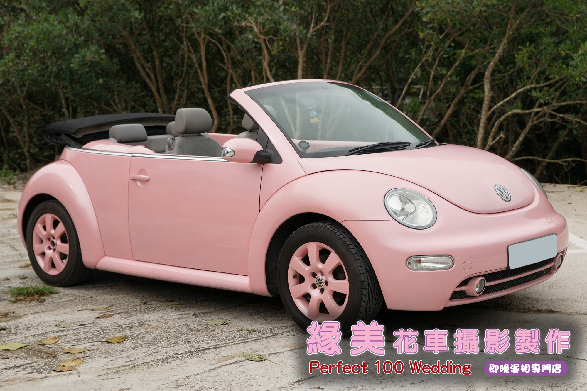 甲蟲-淺粉紅-2e
